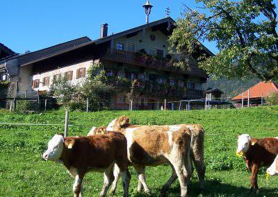 Kälbchen auf dem Altenburger Hof