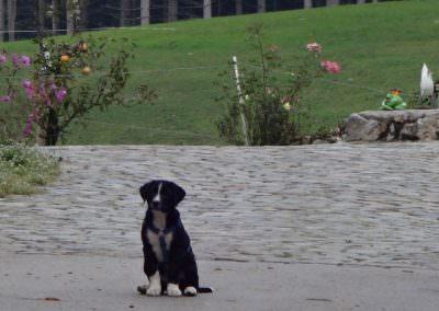 Der verschmuste Hofhund