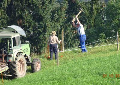 Arbeiten auf der Weide