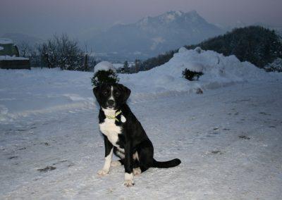 Der Hofhund